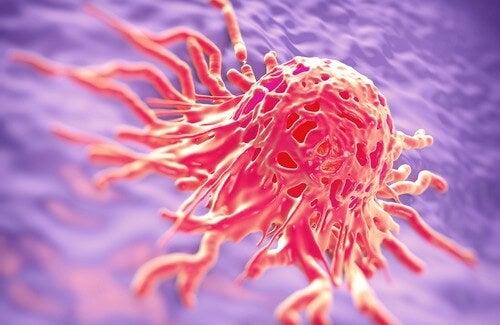 Erbe medicinali per la prevenzione e la cura del cancro