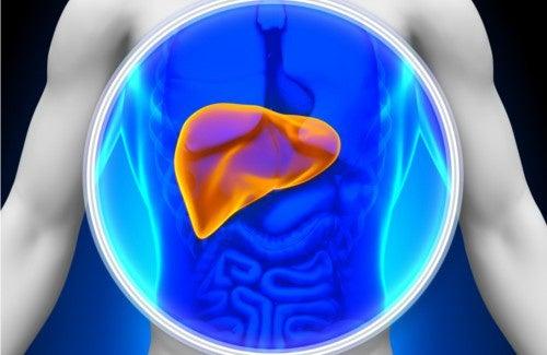 Prendersi cura del fegato seguendo alcuni consigli