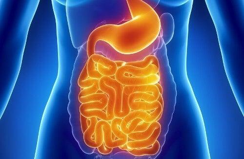 Ripristinare la flora intestinale, ecco i cibi più efficaci