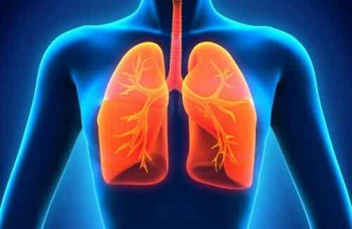 Come pulire i polmoni in modo naturale