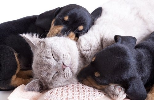 Animali domestici: un grande aiuto per la salute