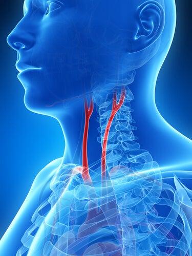è importante sottoporsi a visite di controllo di routine per essere sempre informati su qualsiasi alterazione del proprio sistema circolatorio