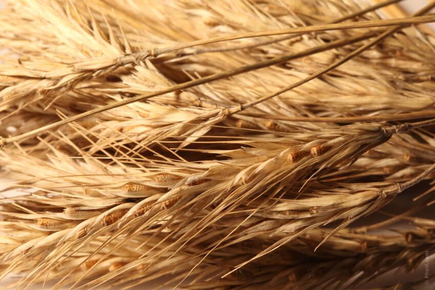 I cereali integrali sono un altro degli alimenti più efficaci contro la stitichezza.