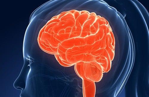 Alimenti che danneggiano la memoria e l'intelligenza