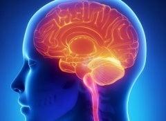 Cervello-500x325