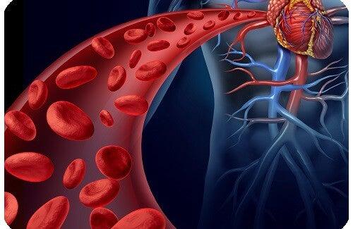 Controllare l'ipertensione: rimedi naturali e alimentazione