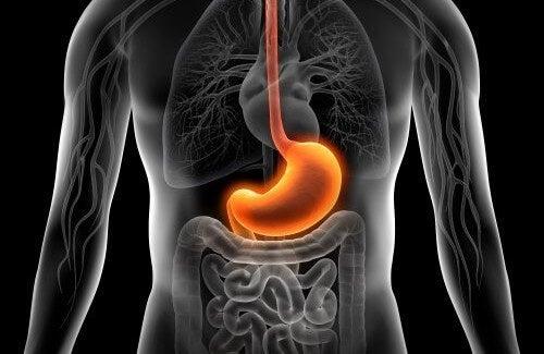 dieta per prendersi cura dello stomaco