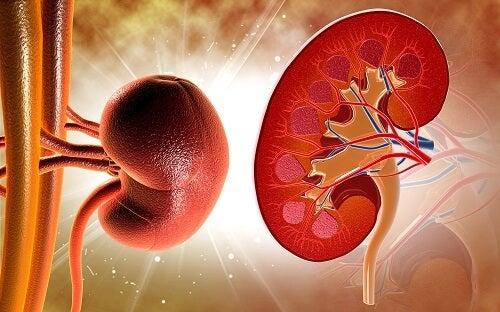 Per evitare la formazione dei calcoli renali, potete anche bere infuso di sedano, circa tre volte al giorno.