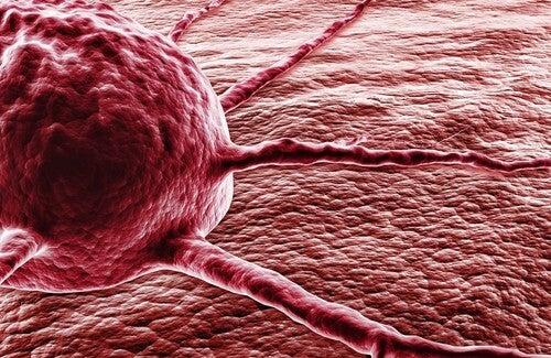 Il peperoncino: un miracolo contro il cancro