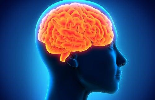 Potenziare la memoria attraverso l'alimentazione