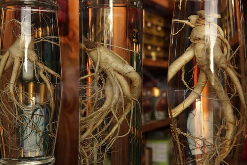 il ginseng rappresenta un ottimo rimedio naturale per aumentare le difese immunitarie