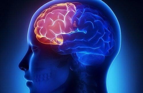 Frullati casalinghi per migliorare la memoria