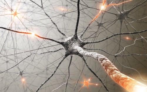 Piante medicinali che migliorano la memoria