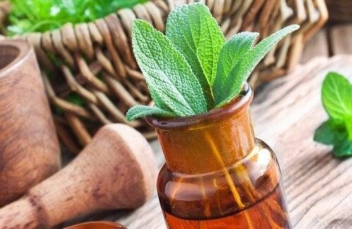 Le 15 migliori erbe medicinali