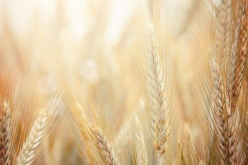 I cereali interi contengono una grande quantità di fibra.