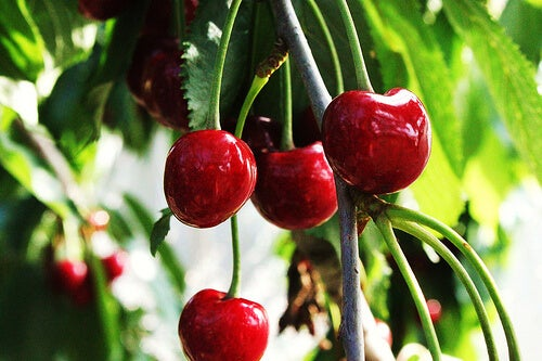 le ciliegie sono una fonte naturale di melatonina