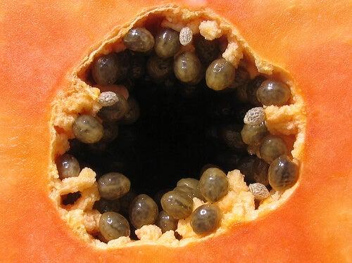 papaya-jshildreth