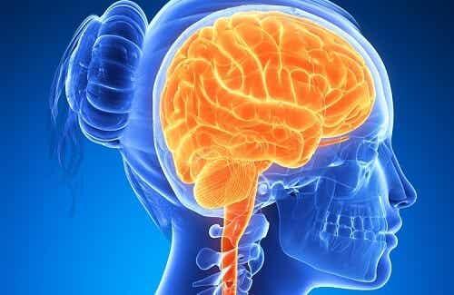 Cervello sano grazie a speciali alimenti per tutti i giorni