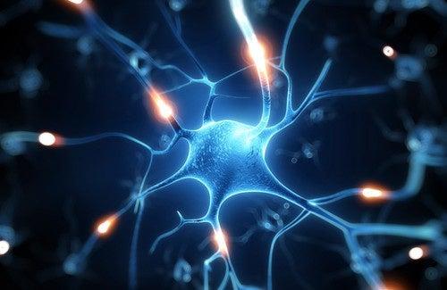 Il Resveratrolo: un eccellente scudo per il cervello