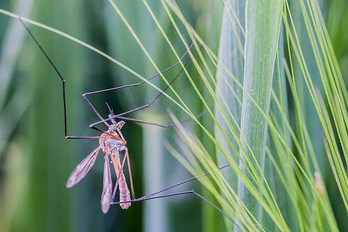 zanzare2