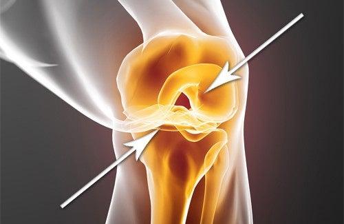 Cartilagine danneggiata: come rigenerarla