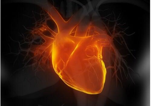 Il tè bianco protegge il cuore, previene gli infarti e regola la pressione sanguigna.