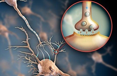 Sistema nervoso e fibromialgia