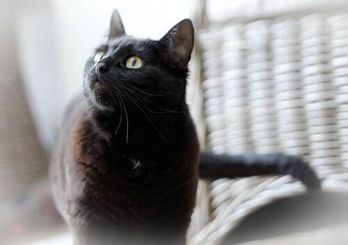 l'olio di oliva fa bene ai gatti
