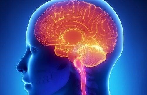 Salute del cervello: 11 abitudini che la danneggiano