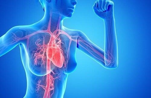 Radiografia in 3D del cuore