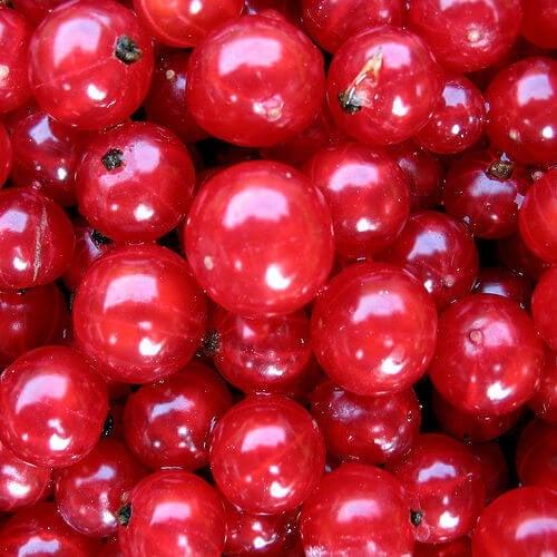 mirtillo rosso - frutti anti-età