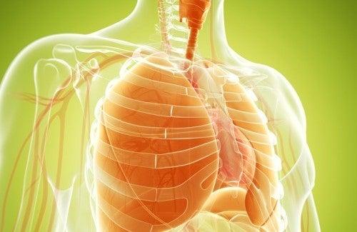 Pulire e rafforzare i polmoni: ecco alcuni rimedi naturali