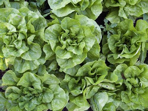 verdure foglia verde