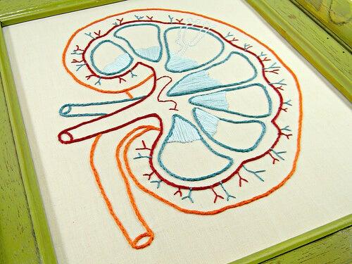 i primi sintomi di una malattia ai reni sono quasi impercettibili