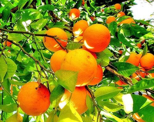 arancia per trattare artrite reumatoide
