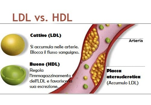 Colesterolo nelle vene accumulo