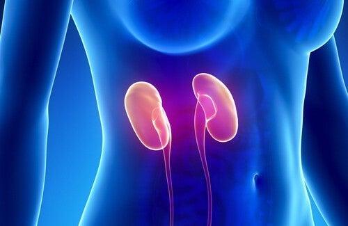 Pulire i reni in una settimana