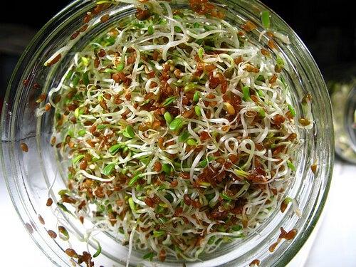 alfalfa-I-Believe-I-Can-Fry