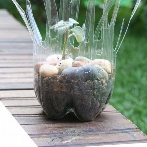 bottiglie di plastica trasformate in vasi piante