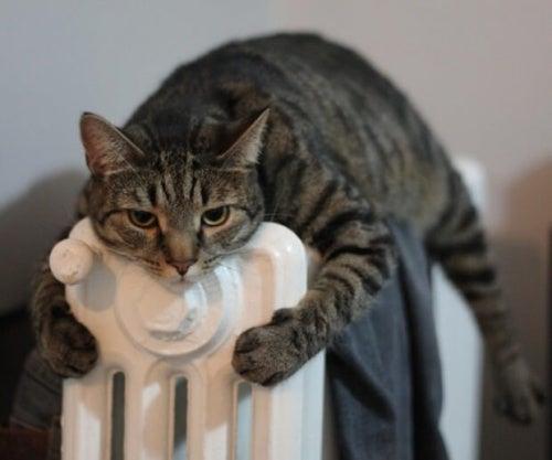 gatto abbracciato al termosifone