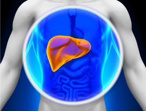 Diagnosticare e curare il fegato grasso