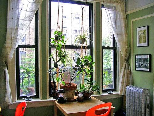 piante depurative dell'aria