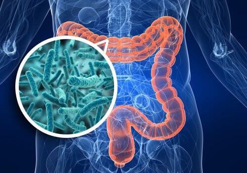 Flora-intestinale