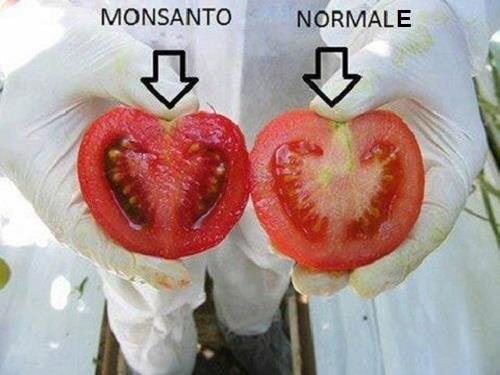 Quali sono i pericoli degli alimenti transgenici?
