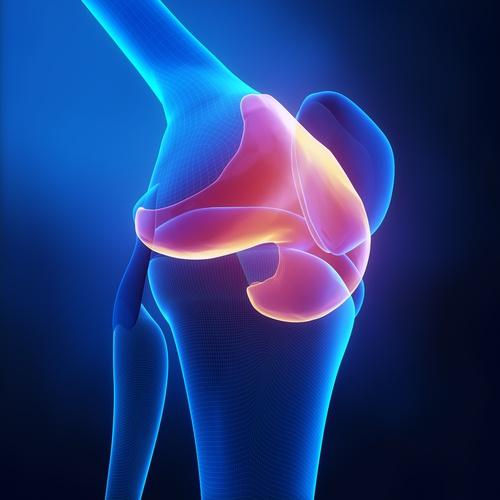 Cartilagine in 3D