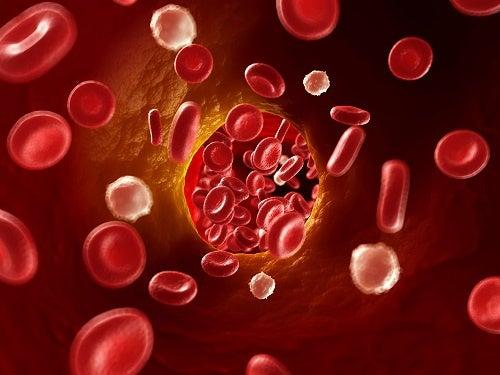 Circolazione del sangue