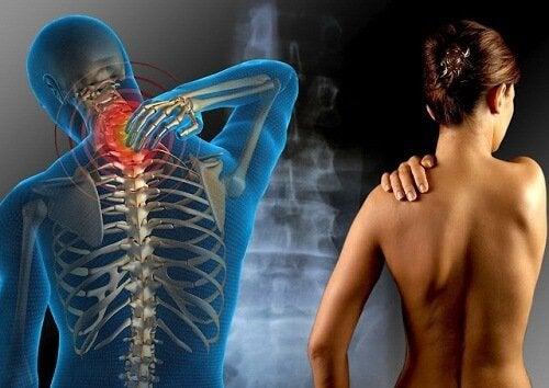 Erbe per il trattamento della fibromialgia