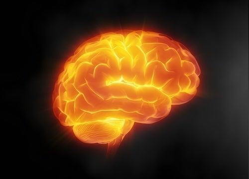 acqua per il cervello
