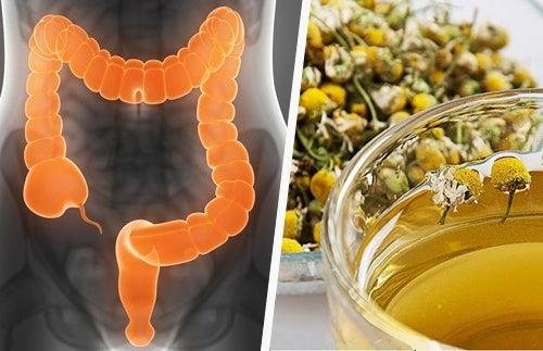 Come depurare il colon con erbe medicinali