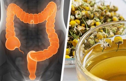 Erbe medicinali per depurare il colon